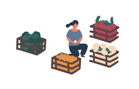 Girl collecting harvest in containers flat vector illustration. Woman sorting farm crop isolated design element. Organic vegetables buying, choosing. Potato, cabbage eco produce in wooden boxes.