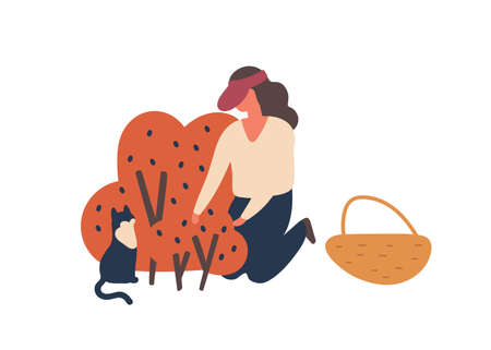 Girl picking forest berries flat vector illustration. Woman gathering blueberries harvest isolated design element. Female gardener and cat cartoon characters. Fall fruits crop, produce. Illusztráció