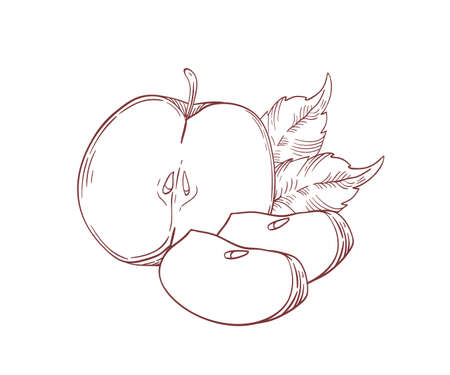 Juicy apples half and slices realistic vector illustration. Raw fruit with leaves isolated clip art on white background. Eco farm product. Ripe organic apple pieces hand drawn design element. Ilustração