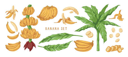 Banana hand drawn vector illustrations set. Banana tree leaves, bunches and peels. Delicious tropical fruit drawings pack. Ripe healthy fruit, natural exotic dessert isolated cliparts collection