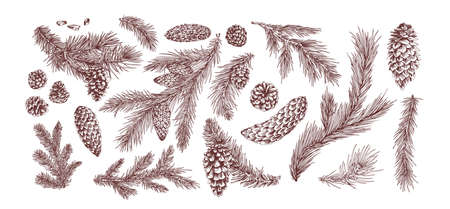 Fir branches hand drawn vector illustrations set. Christmas tree branches pack. Pine cones isolated on white background. Botanical elements realistic drawing. Monochrome floral items.