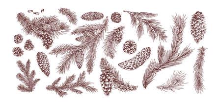 Tannenzweige handgezeichnete Vektorgrafiken eingestellt. Weihnachtsbaumzweige packen. Tannenzapfen isoliert auf weißem Hintergrund. Botanische Elemente realistische Zeichnung. Monochrome Blumenartikel.