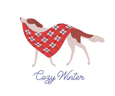 Beautiful dog, domestic animal carrying warm red blanket flat illustration with handwriting. Cozy winter greeting card design element. Wintertime postcard design with adorable pet and calligraphy.
