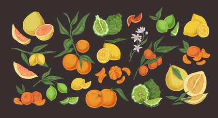 Citrus colorful hand drawn illustrations set. Detailed fruits and herbs vintage drawing collection. Bergamot, pomelo, lemon, lime, mandarin, orange, red orange isolated on black background