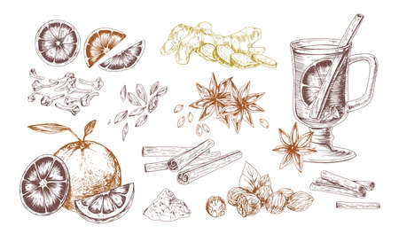 Mulled wine spices hand drawn realistic vector illustrations set. Flavoring seeds and herbs isolated elements. Winter hot drink ingredients. Ginger root, oranges, star anise, clove, cardamom, nutmeg.