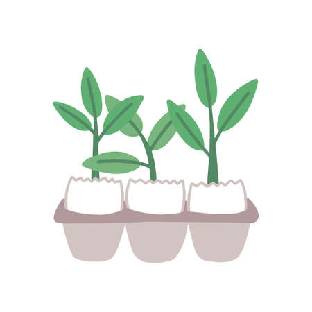 Plant sprouts in eggshell flat vector illustration. Greenery, houseplant sprigs. Gardening, horticulture, plant breeding. Small herbal shoots in egg tray isolated on white background.