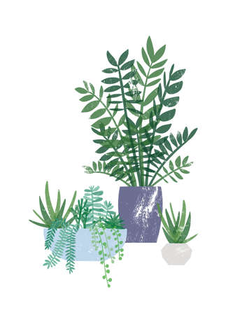 Zamioculcas and succulents in pots flat vector illustration. Exotic houseplants, domestic greenery. Tropical home flowers, beautiful plants in clay flowerpots isolated on white background.