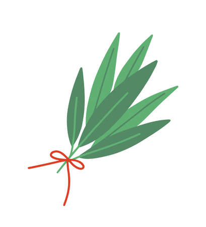Fresh bay leaf flat vector illustration. Aromatic herb bouquet isolated on white background. Green leaves tied with red ribbon. Seasonings and spices kind. Laurel tree leaves and branches. Ilustração