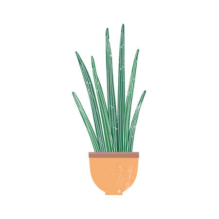 Sansevieria cylindrica houseplant flat vector illustration. Potted cylindrical snake plant isolated on white background. African succulent, stylish domestic decorative greenery, indoor flower.