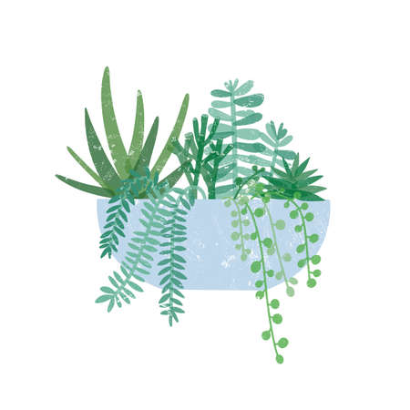 Trendy potted houseplant flat vector illustration. Crassula Hobbit, succulent, string of pearls, fern plants in pot. Exotic green flower, interior decoration element isolated on white. Vektorové ilustrace