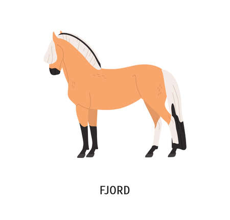 Fjord breed horse flat vector illustration. Pedigree equine, Norwegian hoss. Equestrian sport, horseback riding concept. Norse steed, hoofed animal, mammal isolated on white background Ilustração