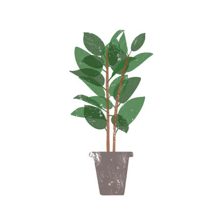 Rubber plant in ceramic pot flat vector illustration. Ficus, trendy potted evergreen houseplant isolated on white background. Indoor flower, domestic decorative greenery. Rubber bush design element Vettoriali