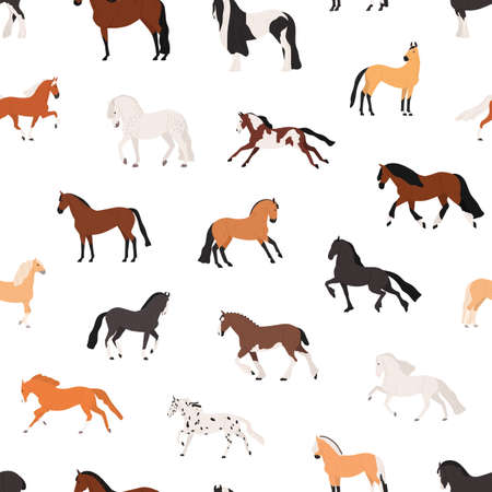 Horse breeding flat vector seamless pattern. Purebreed mares and stallions decorative texture. Thoroughbred racehorses on white background. Equine themed wallpaper, textile cartoon design. Stock fotó - 136531211