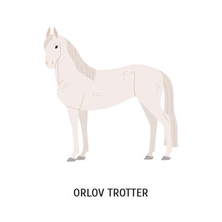 Orlov trotter horse breeding flat vector illustration. Famous Russian racehorse isolated on white background. Graceful stallion with long mane and tail. Beautiful white mare standing pose