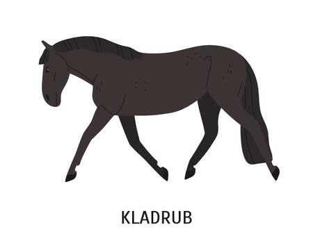 Kladruber breed horse flat vector illustration. Drafter, Czech equine, beautiful harness hoss. Horse breeding, horseback riding concept. Steed, hoofed animal isolated on white background.