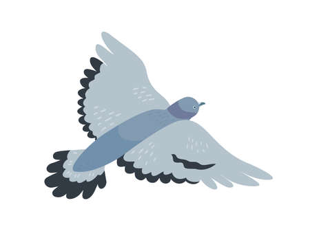 Flying pigeon flat vector illustration. Free animal with dark grey plumage. Gray dove with spread wings. Bird flight, freedom symbol. Adorable gliding birdie isolated on white background.