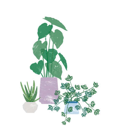 Potted homeplants flat vector illustration. Natural philodendron, plant with heart shaped leaves in ceramic pot. Natural home decorations isolated on white background. Horticulture design element