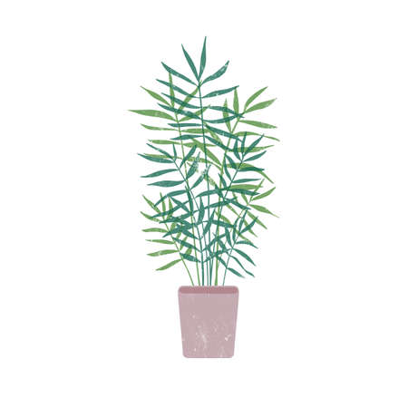 Chamaedorea in flowerpot flat vector illustration. Natural plant with thin leaves in clay pot. Organic decoration, beautiful houseplant isolated on white background. Decorative greenery. 向量圖像