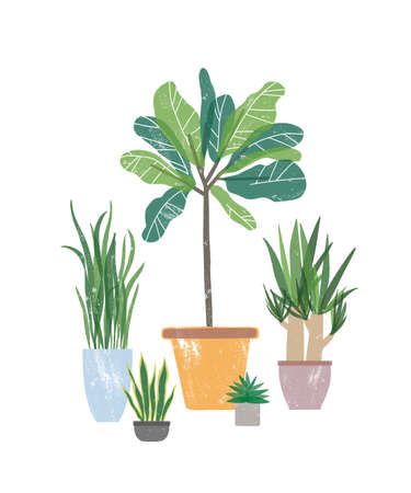 Decorative houseplants flat vector illustration. Natural yucca and sansevieria in flowerpots. Potted plants, home decorations isolated on white background. Floristry, gardening design element.