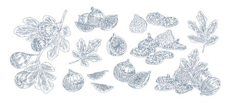 Fig tree fruits black ink illustrations set. Hand drawn ripe whole and sliced berries pack. Fig plant twigs and leaves monochrome drawings. Sweet exotic fruits isolated on white background. Иллюстрация