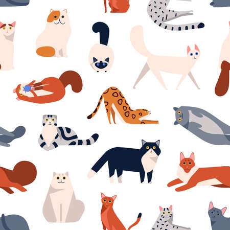 Cat breeds flat vector seamless pattern. British shorthair, Turkish Angora, American curl kittens decorative cartoon background. Domestic animals playing, sitting color texture design.