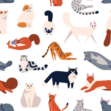 Cat breeds flat vector seamless pattern. British shorthair, Turkish Angora, American curl kittens decorative cartoon background. Domestic animals playing, sitting color texture design.