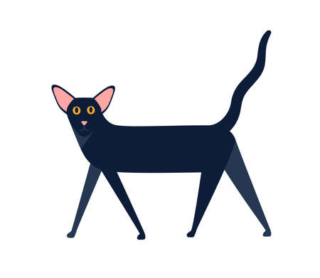 Oriental shorthair cat breed vector flat illustration. Cartoon black mammal animal walking isolated on white background. Black domestic colored graphic character