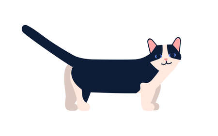 Munchkin cat breed vector flat illustration. Cartoon short-legged pet with raised tail isolated on white background. Cute domestic friend animal breeding  イラスト・ベクター素材