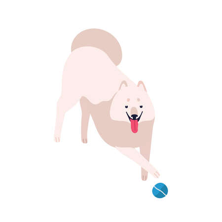 Cute cartoon playful samoyed dog vector flat illustration. White fluffy domestic animal playing with ball isolated on white background. Funny friendly purebred furry pet