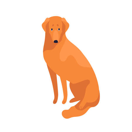 Attractive clever golden retriever dog breed vector flat illustration. Cute domestic animal sitting isolated on white background. Cheerful obedient thoroughbred pet