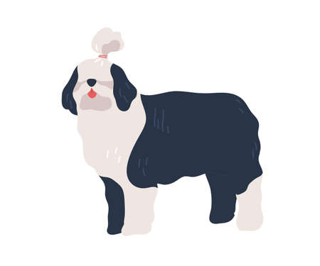 Cute cartoon bobtail dog with hairstyle after grooming vector flat illustration. Long haired black and white domestic animal standing isolated on white background. Funny colorful pet posing