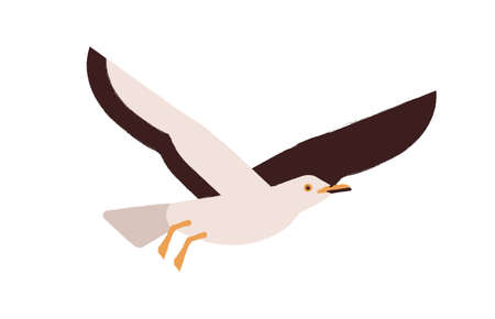 Cartoon atlantic seabird flying isolated on white background. Colored cute seagull vector flat illustration. Beautiful marine bird enjoying freedom. Adorable winged creature. Colorful wild gull.