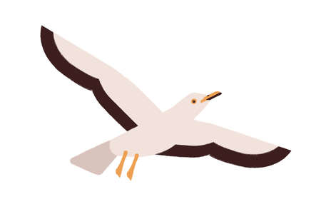 Cartoon seagull flying straighten wings vector flat illustration. Colorful atlantic seabird character representative of wildlife fauna species isolated on white background. Marine gull bird
