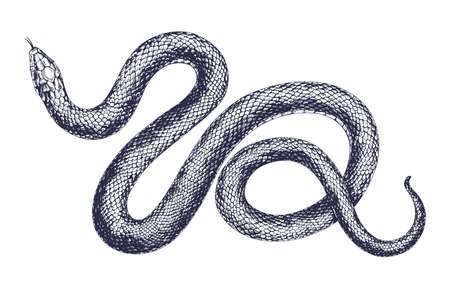 Illustration de gravure de vecteur de serpent vintage. Main, dessin reptile dangereux isolé sur fond blanc. Prédateur sauvage tropical réaliste. Vipère dessin noir et blanc Vecteurs