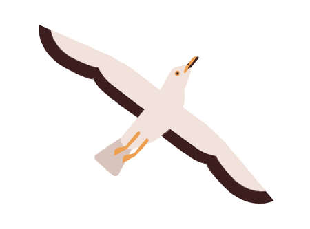 Cartoon seagull take off straighten wings vector flat illustration. Colorful marine bird flying enjoying freedom isolated on white background. Beautiful wild atlantic seabird