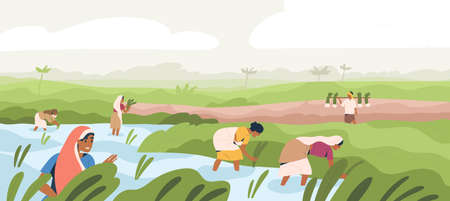 Smiling Indian farmers working in paddy field vector flat illustration. Man and woman in traditional clothes picking harvest. Male and female agricultural workers at plantation landscape Ilustracje wektorowe