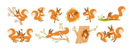 Set of cute squirrel character vector flat illustration. Collection of funny wild animal parent, child and couple isolated on white. Colorful forest inhabitant jumping, sleeping and creeping