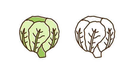 Colorful and monochrome savoy cabbage set in line art style. Ripe raw fresh green vegetable vector illustration. Seasonal ingredient for dieting, vegetarian and healthy nutrition