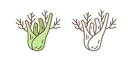 Healthy organic fennel root illustration in line art style. Set of colorful and monochrome natural vegetable isolated on white. Seasonal aromatic herbal fresh plant with spicy taste