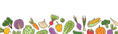 Colorful fresh organic vegetable horizontal background in line art style. Bright healthy vegetarian food illustration. Ripe vegetables, salads and herbs isolated on white