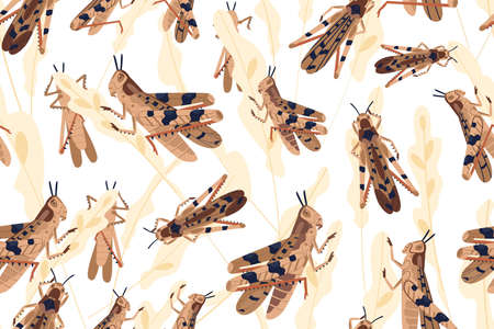 Swarm of locusts attacking rice crop seamless pattern. Grasshoppers on ripe seed head vector illustration. Parasites destroy natural herbs. Agricultural plague. Insects threatening food security