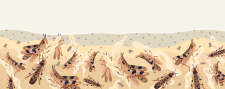 Colorful locusts attacking plants field horizontal background. Swarm of Insects threatening food security vector illustration. Large grasshoppers parasite on ripe seasonal seed head isolated on white Illustration