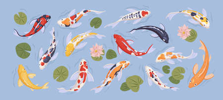 Set of japanese colorful koi carp fish in decorative japan traditional pond. Collection with goldcarps and nelumbo flowers isolated on blue background. Flat vector illustration with asian art animal  イラスト・ベクター素材