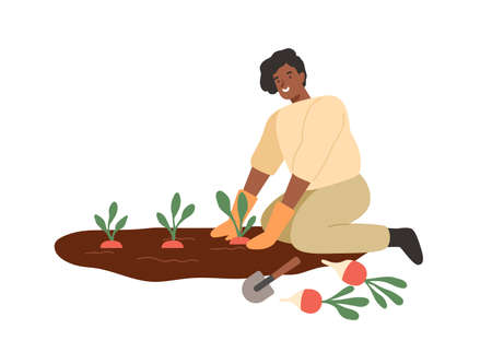 African american smiling woman gathering harvest on vegetable patch vector flat illustration. Female farmer cultivate plants on seedbed isolated on white. Agricultural girl during work