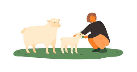 Farmer female feeding lamb and sheep by green grass vector flat illustration. Smiling woman agricultural worker taking care to farm animals isolated on white. Mother and baby fluffy mammals eating