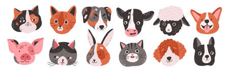 Set of happy funny domestic animals or farm pet. Different faces, muzzles, heads or avatars. Cats, dogs, sheep, cow, pig, rabbit or hare. Flat vector cartoon illustration isolated on white background 免版税图像 - 152317028