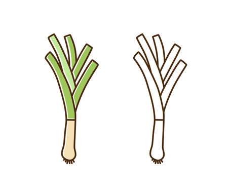 Organic natural leek monochrome and color set vector flat illustration. Fresh big root and stem of farm vegetable in line art style. Cute icon of vegetarian food with vitamins isolated on white