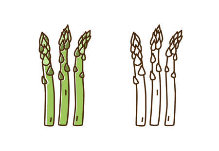 Tasty fresh asparagus monochrome and color set vector flat illustration. Natural dietary edible plant in line art style isolated on white. Cute icon of organic vegetable for healthy nutrition