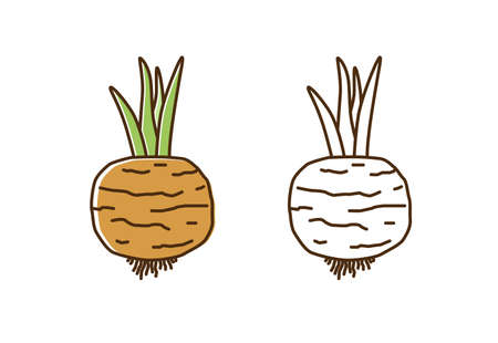 Cute colorful and monochrome turnip icon vector flat illustration. Natural organic radish with root and stem in line art style. Fresh vegetable or vegetarian healthy food isolated on white