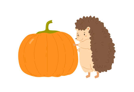 Cute hedgehog holding huge ripe pumpkin vector flat illustration. Funny forest animal standing autumn seasonal harvest isolated on white. Adorable childish character with fall orange vegetable